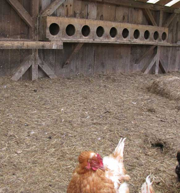 It is usually recommended to have one nesting box for every 2-5 hens.